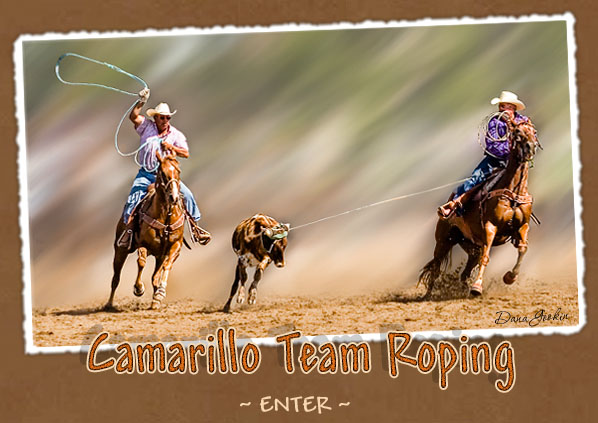 team roping steers in michigan